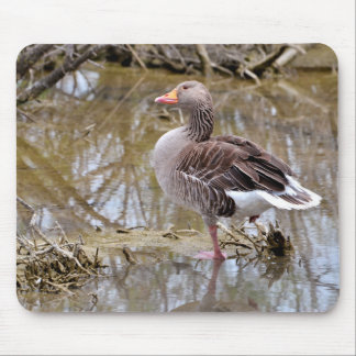 Greylag goose in water mouse pad