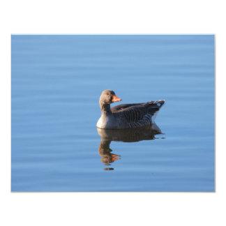 Greylag Goose Invite