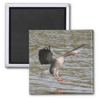 Greylag Goose Magnet