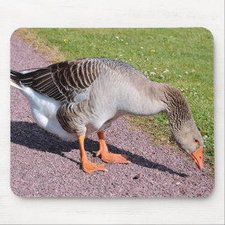 Greylag goose on gravel mouse pad
