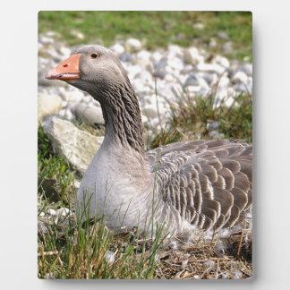 Greylag goose on nest plaque