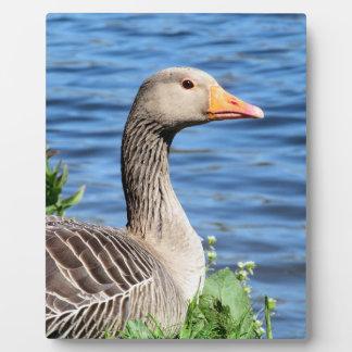 Greylag Goose Plaque