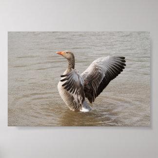 Greylag Goose Print