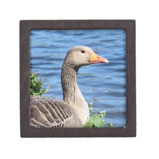 Greylag Goose Premium Gift Boxes
