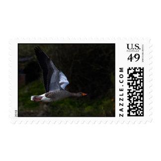 Greylag Postage