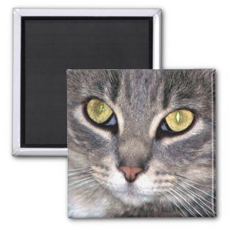 greys yellow eyes 2 inch square magnet