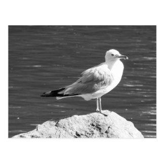 Greyscale seagull on a rock postcard