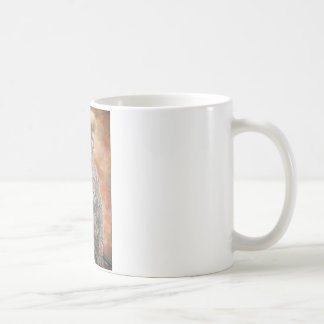 griff taza