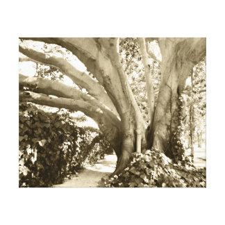 Griffith Park Tree Vintage Sepia Black White Gift Canvas Print