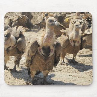 Griffon Vulture Mouse Pad