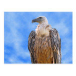 Griffon vulture on branch postcard