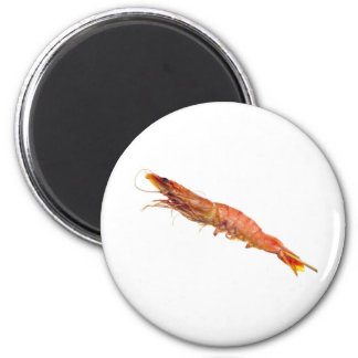 Grilled tiger prawn on a skewer 2 inch round magnet