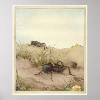 GRILLO de THE FIELD - ejemplo de libro del insecto Impresiones