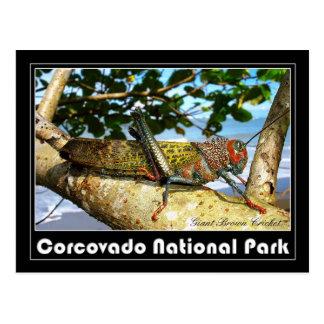 Grillo gigante de Brown, parque nacional de Tarjeta Postal