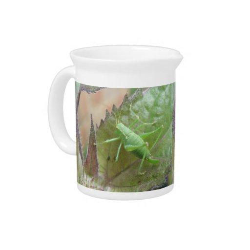 Grillo verde en una jarra de la hoja