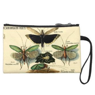 Grillos norteamericanos de la serie de los insecto