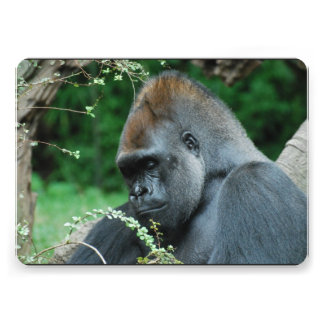 Grim Gorilla Card