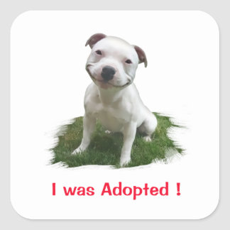 Grinning Pitbull I was Adopted Square Sticker