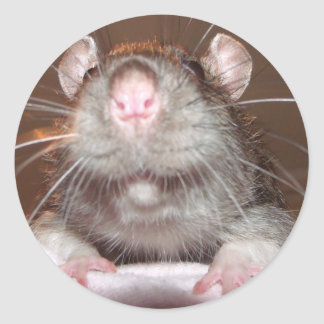 grinning rat stickers