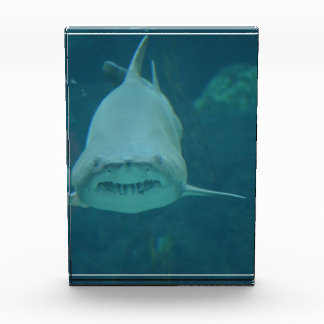 Grinning Shark Award