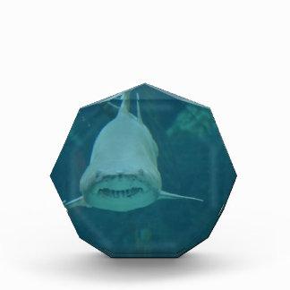 Grinning Shark Acrylic Award