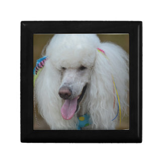 Grinning White Standard Poodle Jewelry Boxes