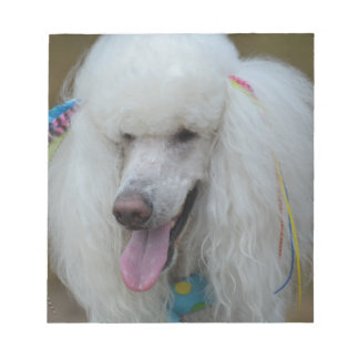 Grinning White Standard Poodle Memo Notepad