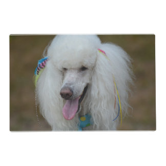 Grinning White Standard Poodle Laminated Placemat