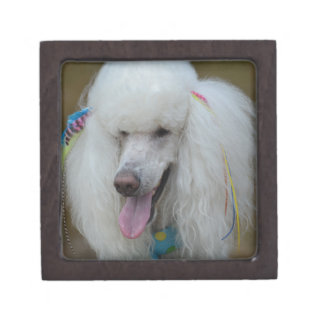 Grinning White Standard Poodle Premium Jewelry Box
