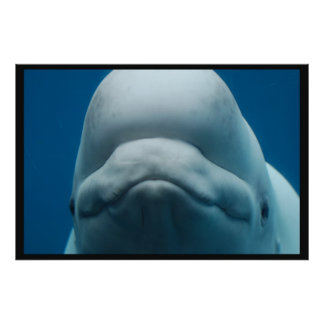 Grinning White Whale Poster