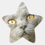 Gris de Jean de la esperanza pasada Pegatina En Forma De Estrella