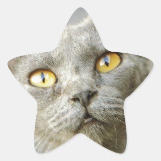Gris de Jean de la esperanza pasada Calcomania Forma De Estrella Personalizada