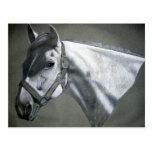 Gris en arte equino gris tarjeta postal
