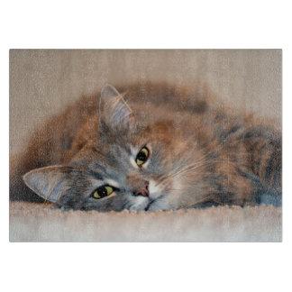 Gris, moreno, gato de pelo largo blanco de Shirley Tabla De Cortar