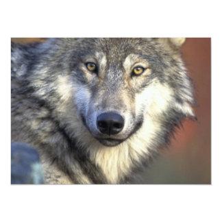 """Gris y White Wolf Invitación 5.5"""" X 7.5"""""""