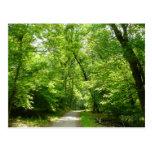 Grist Mill Trail I Patapsco State Park Maryland Postcard