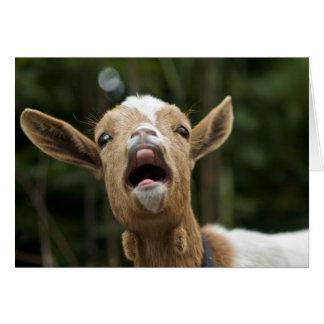 """""""Gritando la cabra grita para usted """" Tarjeta Pequeña"""