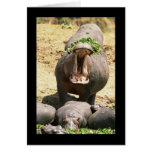 Grito del hipopótamo tarjeta