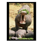 Grito del hipopótamo tarjeta postal