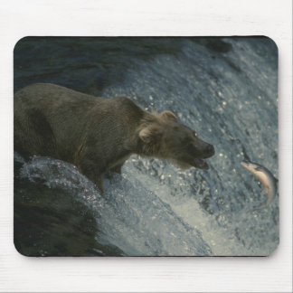 Grizzley Bear Mouse Pad
