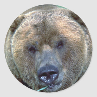 Grizzley bear round stickers