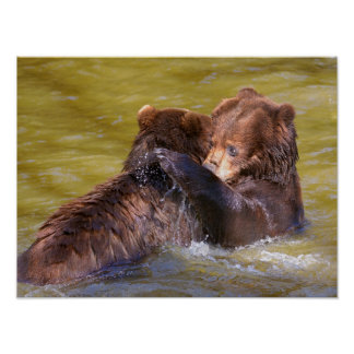 Grizzlies in the water poster