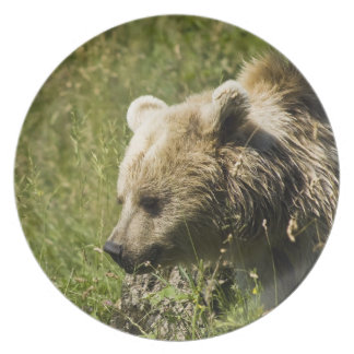 Grizzlies Plate