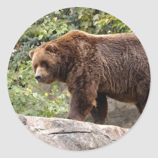 grizzly-bear-001 classic round sticker