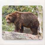 grizzly-bear-001 mouse pad