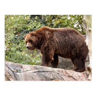 grizzly-bear-001 postcard