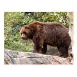 grizzly-bear-001 postcards