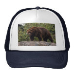 grizzly-bear-002 gorra