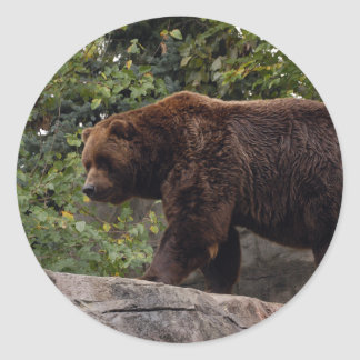 grizzly-bear-003 classic round sticker