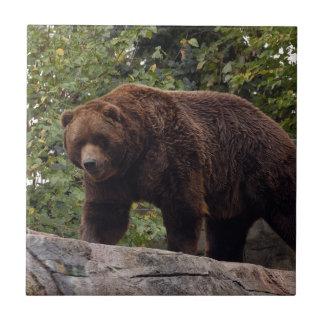 grizzly-bear-004 azulejo cuadrado pequeño